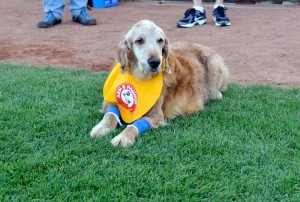 After 11 years serving as the bat dog of the Trenton Thunder, Chase heads off into retirement with one final ceremony. (Photo from Trenton Thunder on Facebook)